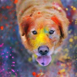 In Nepal ogni anno si svolge un festival per ringraziare i cani per la loro amicizia